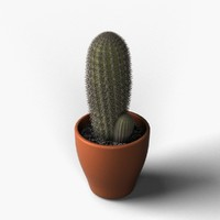 cactus design 3d model