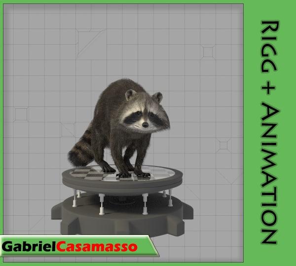 raccoon animation 3d model
