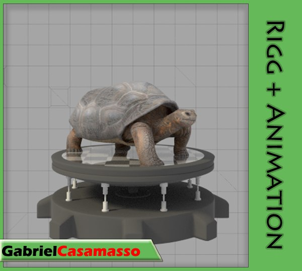 galapagos-tortoise animation 3d fbx