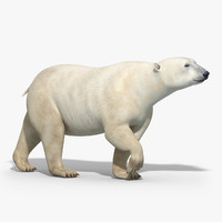 Polar Bear(RIGGED)