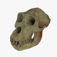 3d gorilla skull