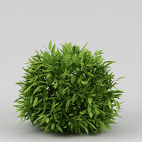 bush_40