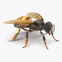 3d honey bee