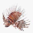 lionfish 3D models