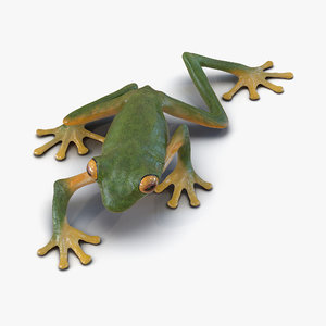 3d tree frog pose 2