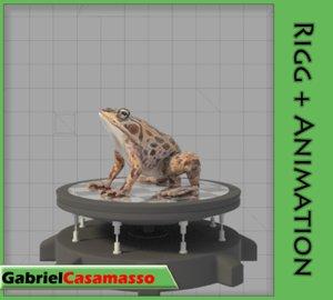 3d frog animation model