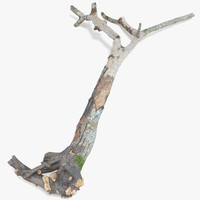 3d model modo tree broken withered