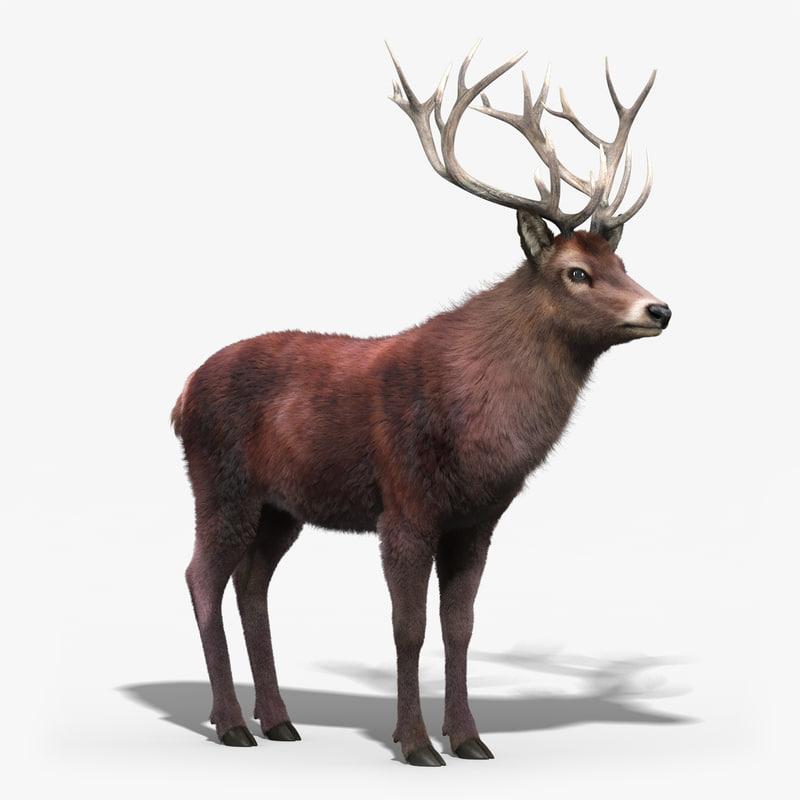 red deer stag 3 max