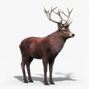 red deer stag 3 max
