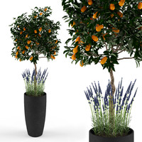 Kumquat and lavender