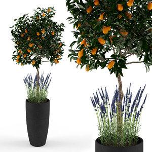 kumquat tree 3d max