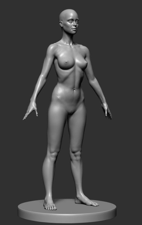 Female Anatomy 3d Model