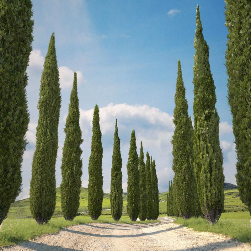 cypress trees 3d model