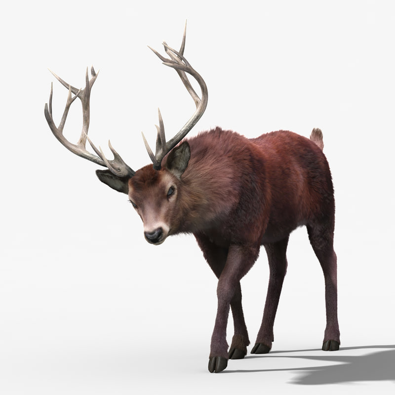 3d red deer stag 3 model