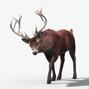 3d red deer stag 3 model