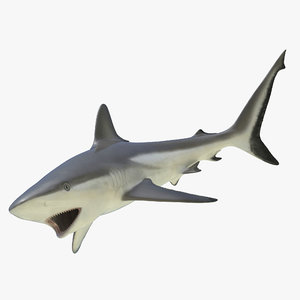 3d grey reef shark rigged