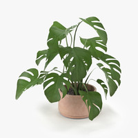 max plant animation