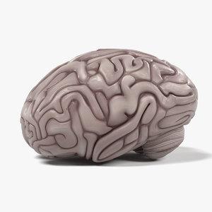 3ds brain