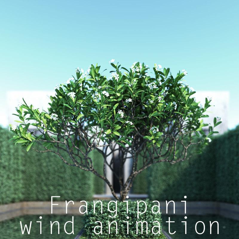 3d model trunk wind animation