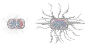 3d model micro parasite
