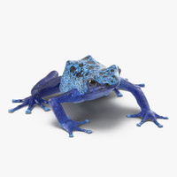 poison dart frog pose obj