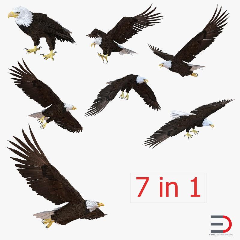 bald eagle 3d model
