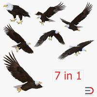 Bald Eagle Collection