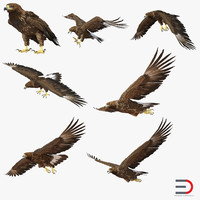 Golden Eagles 3D Models Collection