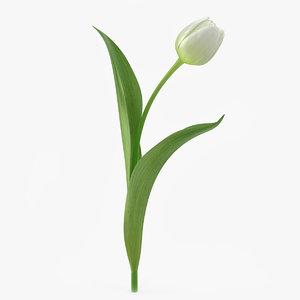 tulip flower 3d model