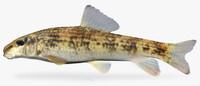 fbx moxostoma cervinum blacktip jumprock
