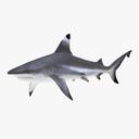 blacktip shark 3D models