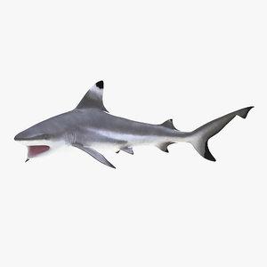3d blacktip reef shark pose