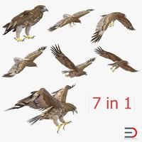 gurney eagle 3d obj