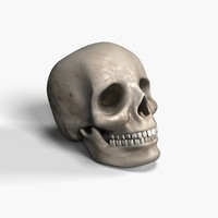 3d model skull bone