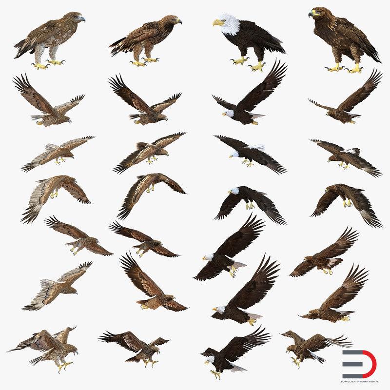 eagles modeled 3d model