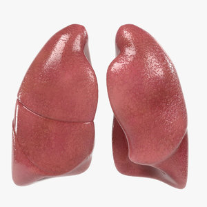 3ds lungs