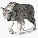White Tiger 3D models