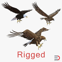 Rigged Eagles 3D Models Collection