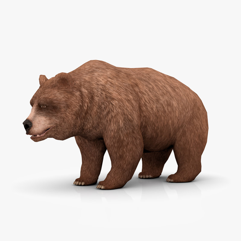 3d model brown bear