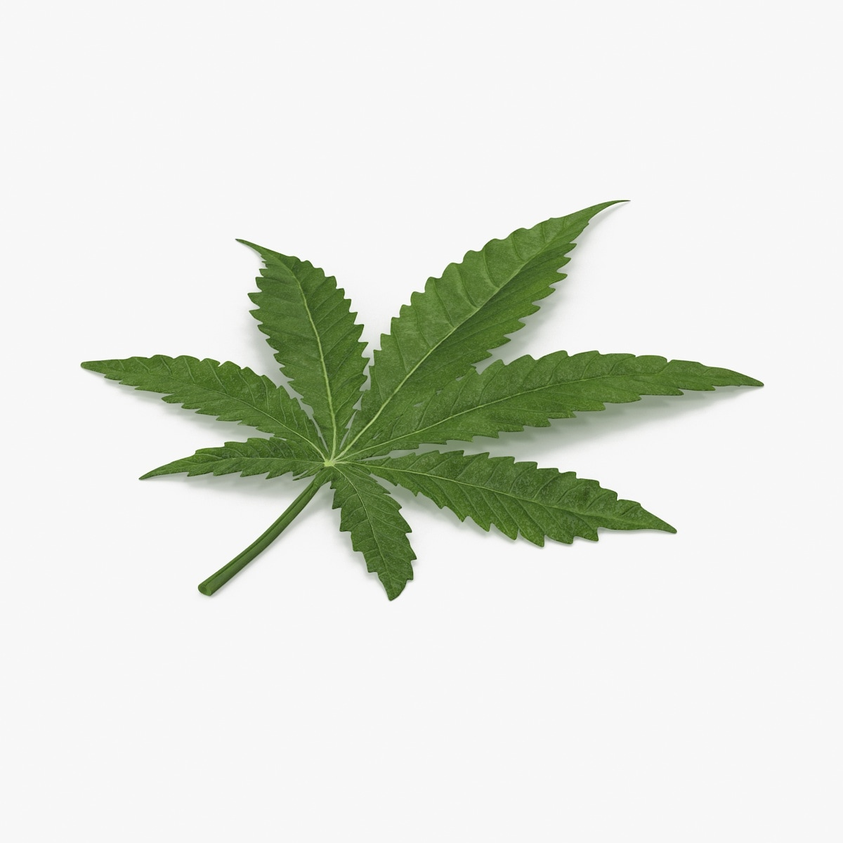 3d marijuana leaf