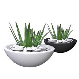 3d aloe vera potted plant
