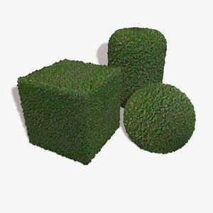 Maze Hedge Seamless Texture