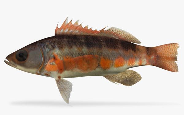 ma saltwater fish