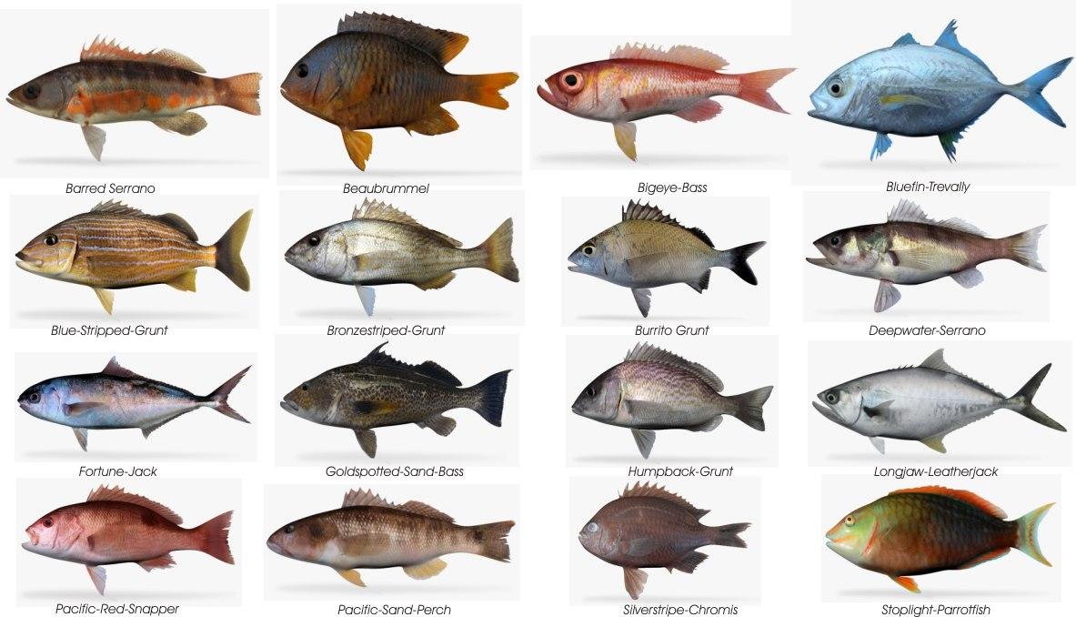 Ma saltwater fish for Mass fishing regulations