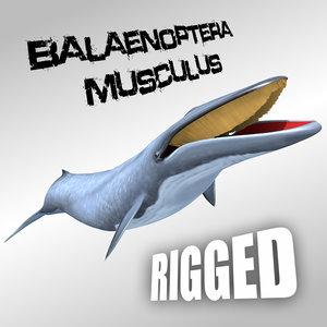 blue whale fbx