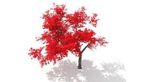 acer japonicum autumn 3d c4d
