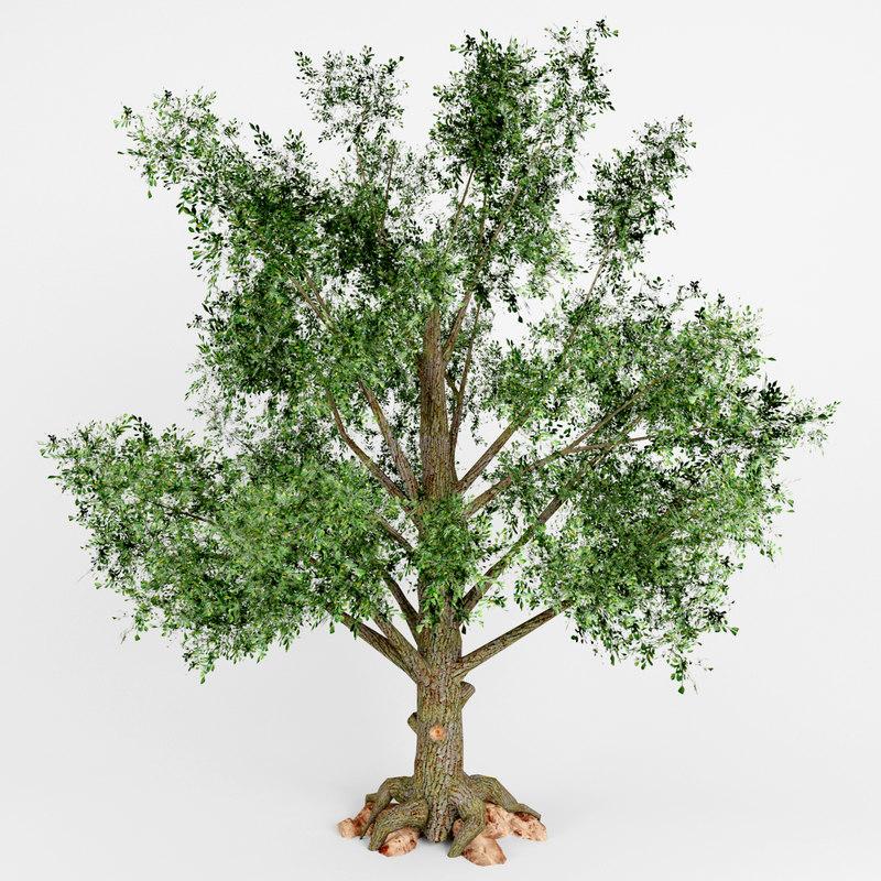 3d model deciduous tree