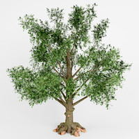 3d model deciduous tree