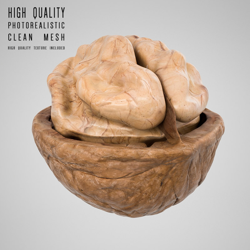 walnut modeled modo 3d model