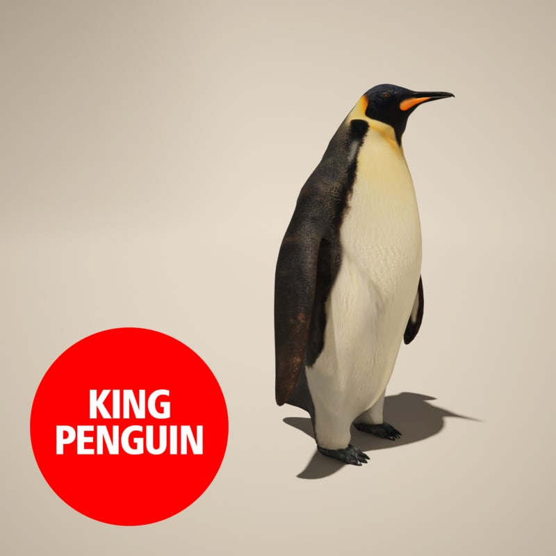 penguin king 3d max
